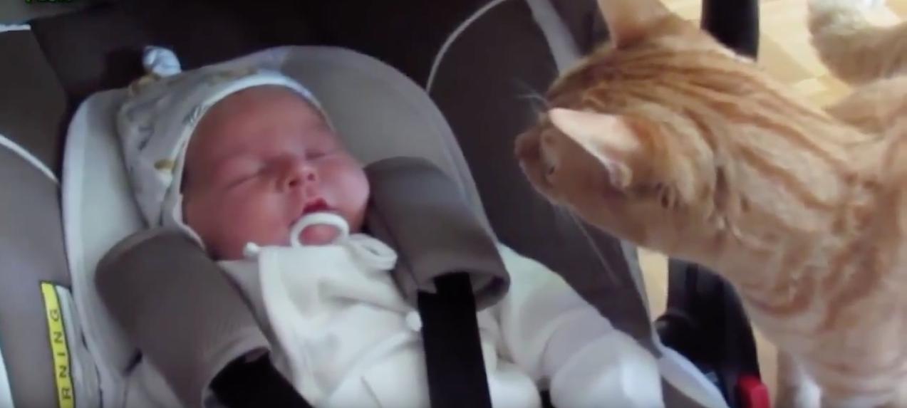 Bébé qui rencontre les animaux