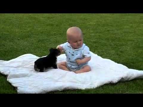 Chiot contre bébé